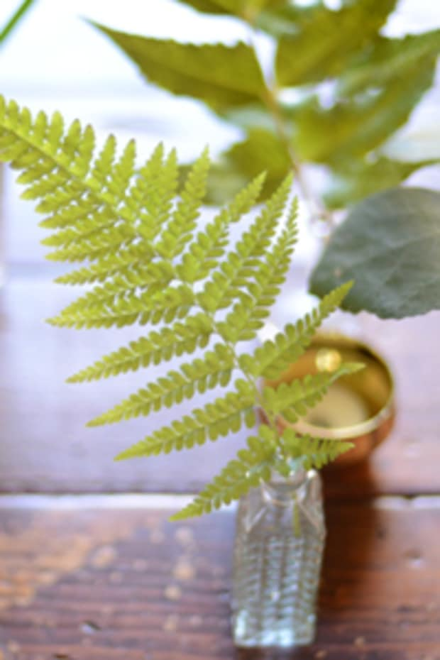 centerpiece_fern
