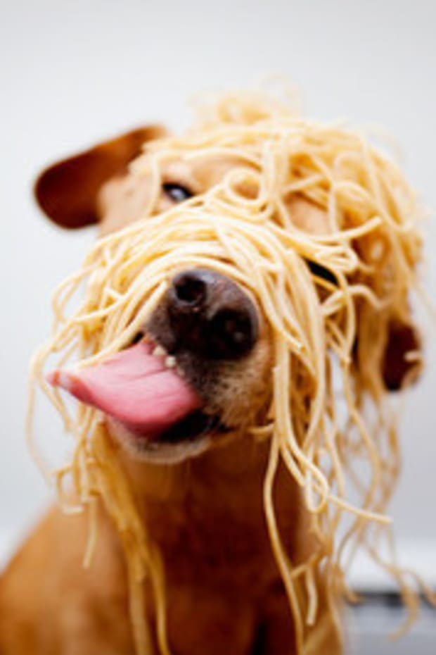 spagetti-dog