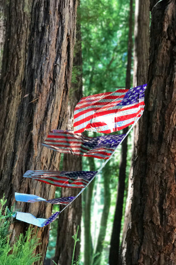 flags in the redwoods