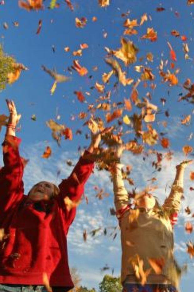 throwing-leaves