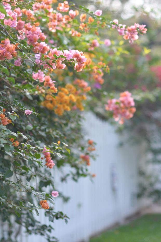 spring-looking flowers hero