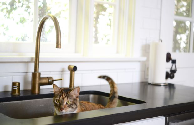 {Cali, our perpetual scavenger, hunting in the sink for scraps of food}