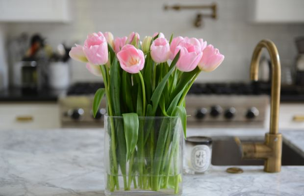 {Pink tulips the cats desperately want to eat}