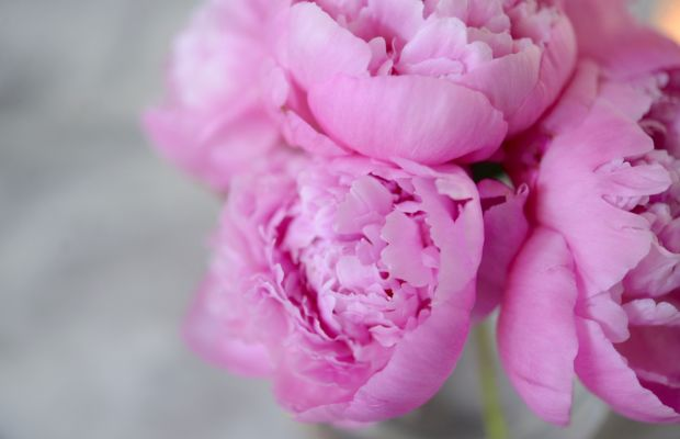 {Happy that peonies are back in season!}