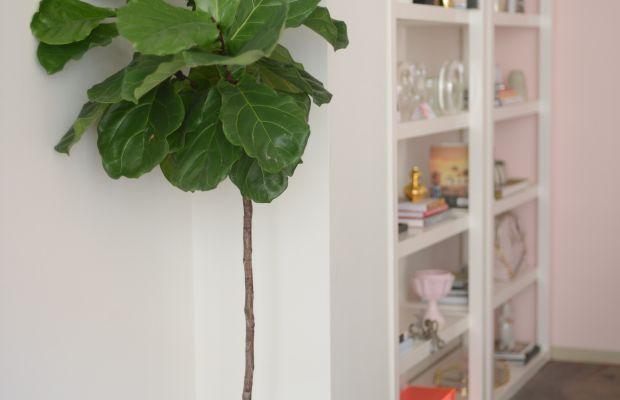 Office Reveal_Fiddle Leaf.jpg