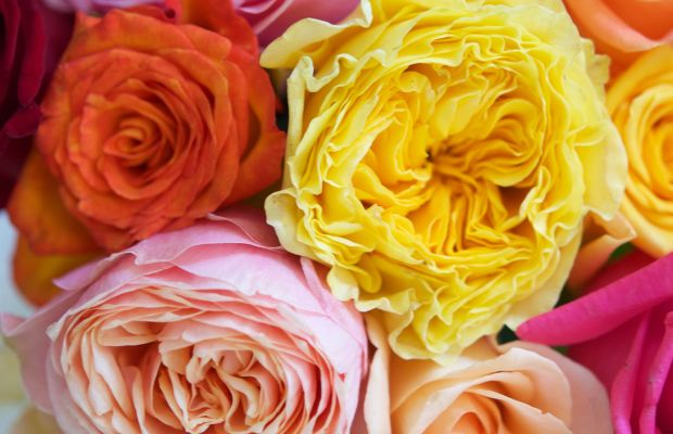 {The brightest bouquet of roses to brighten up our kitchen counter)