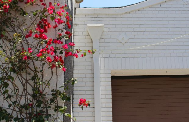 {The pinkest bougainvillea on the brightest day}