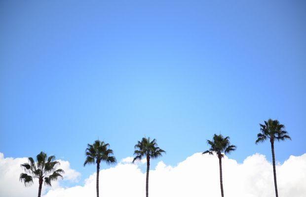 palm-trees-%2B-windy