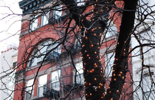 {illuminated trees}