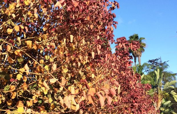 {Leaves starting to show signs of fall in the neighborhood}