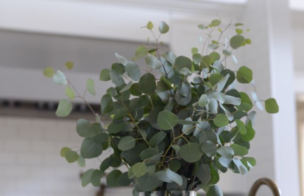 {The best-smelling bouquet of eucalyptus for the kitchen}