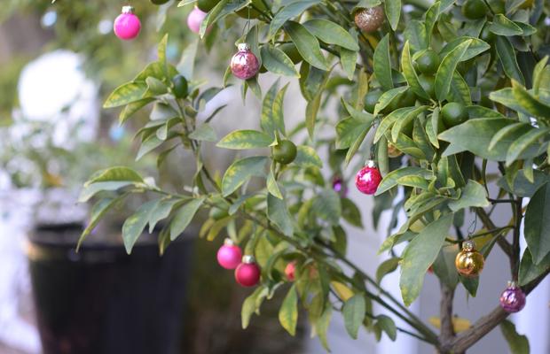 {Kumquat trees decorated with teensy ornaments}
