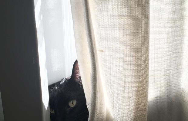 {Luna's new favorite spot in the window}