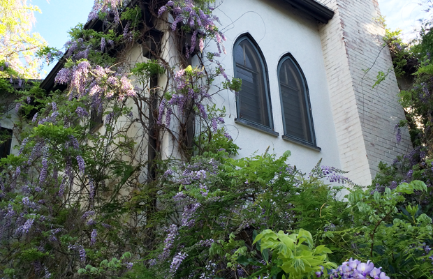 {Scenes from our daily walk: I love this home dripping in wisteria}