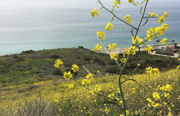 {Shades of yellow and blue on a short Malibu hike}
