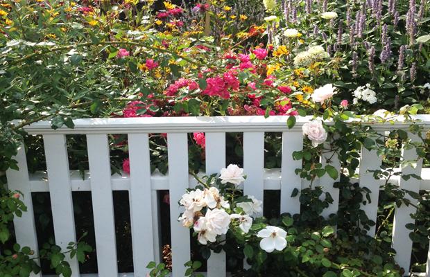 {Overgrown wild flower garden}