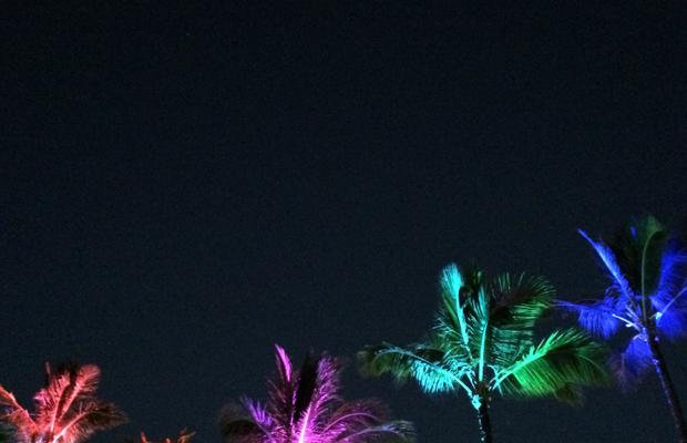 {Palms at night}