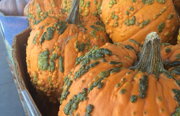 {Crazy-looking pumpkins}