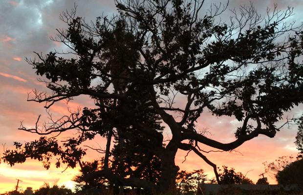 {Dramatic fall sunset}