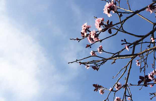 {Blooms on an afternoon walk}