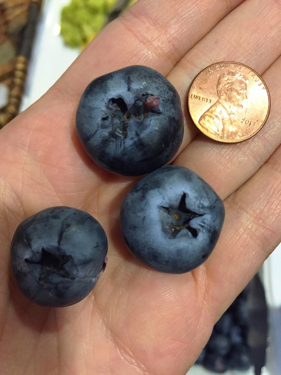 {The biggest blueberry ever, from my quick trip to Dallas}