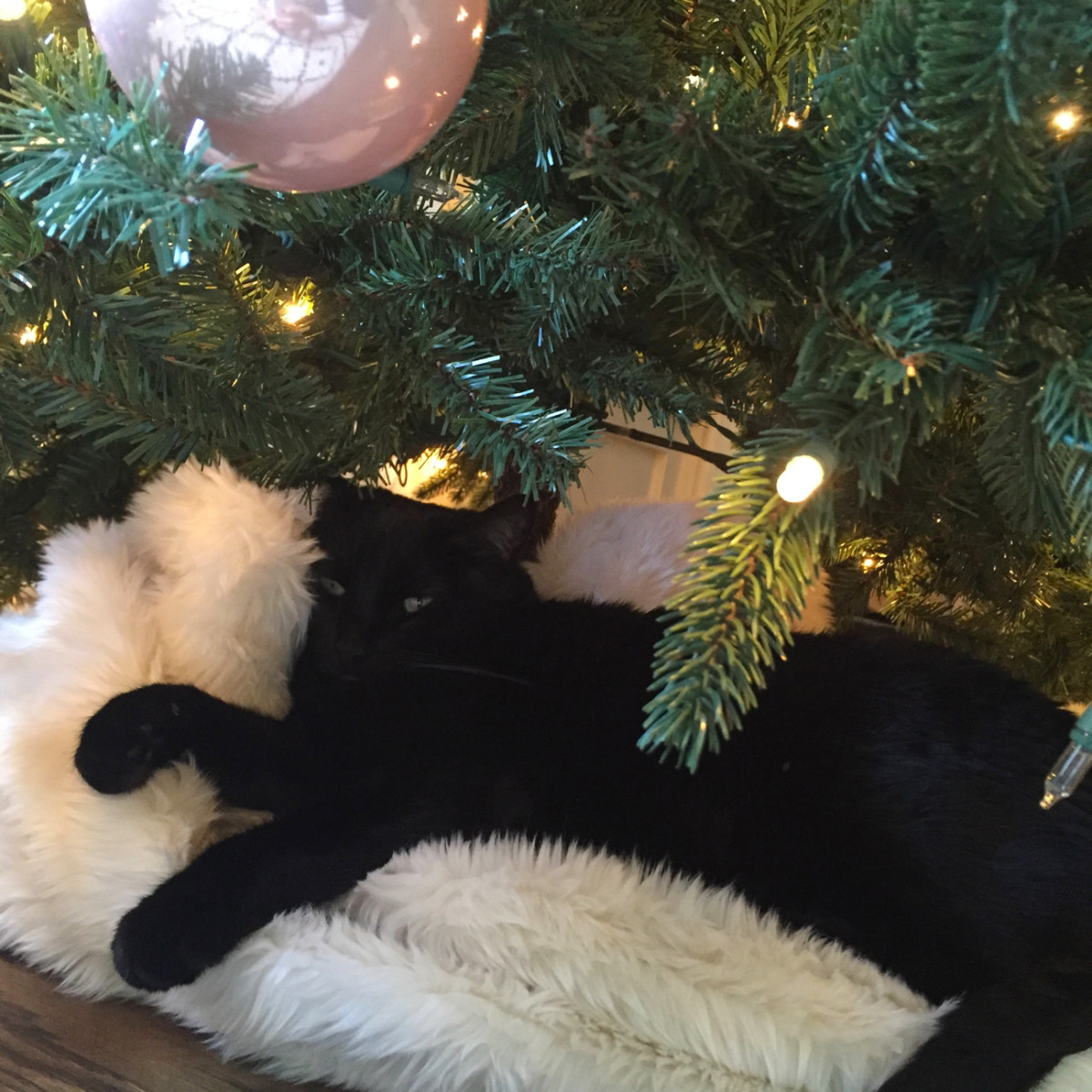 {Luna's permanant spot under the tree}