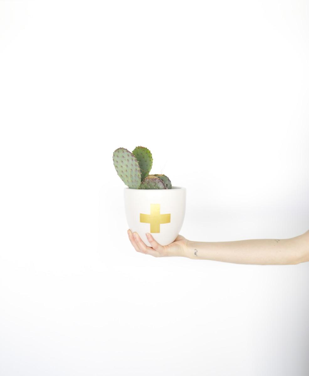 cactushand.jpg