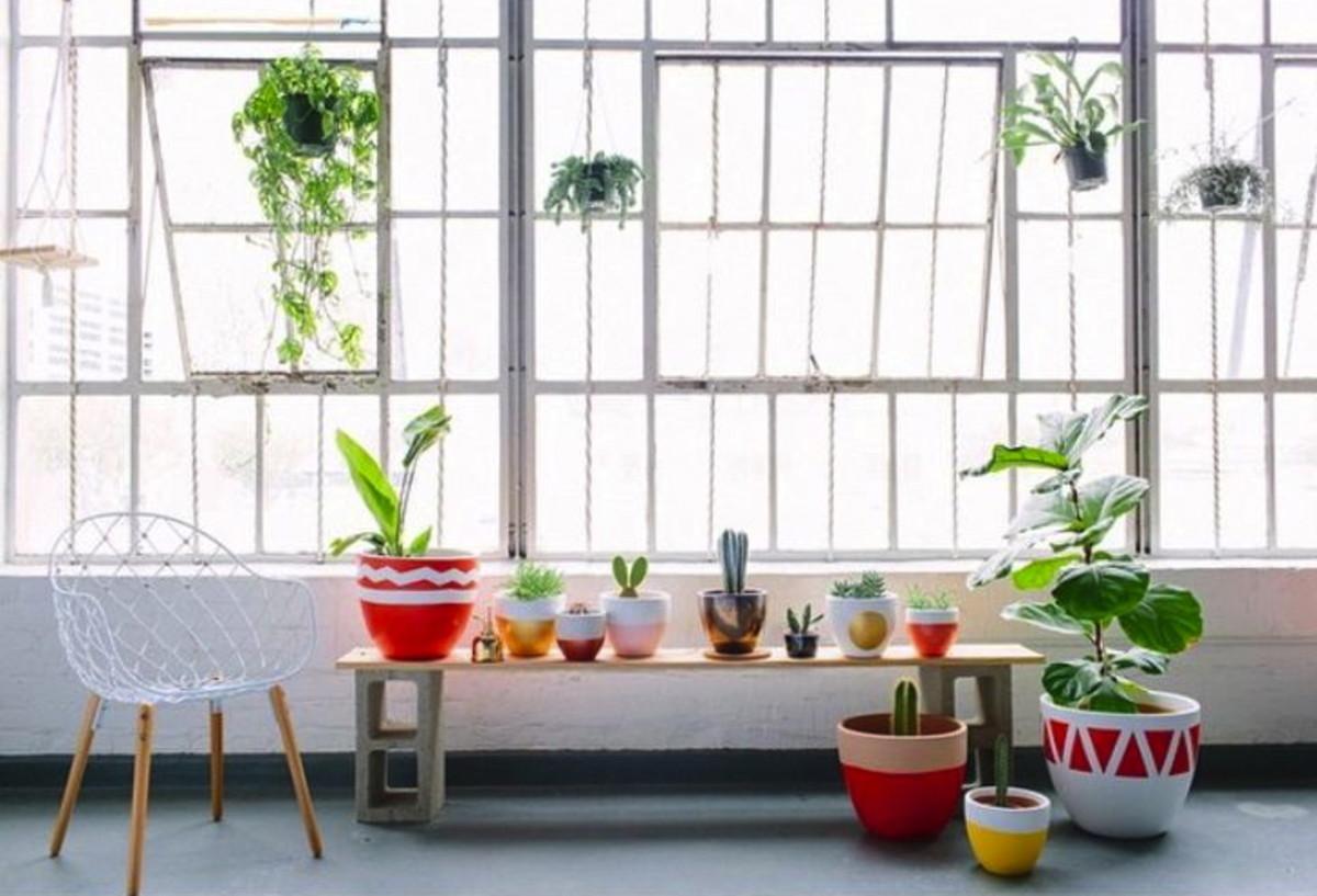 plantsonbench.jpg