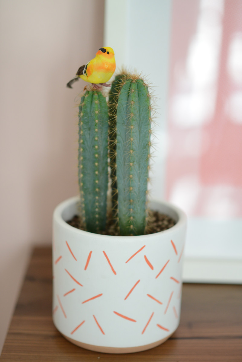 {Bringing the outside in with this little bird that now lives on our office cactus}
