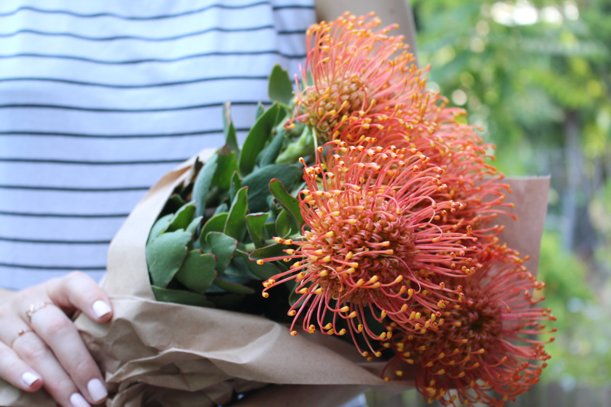 Flower of Summer 1.JPG