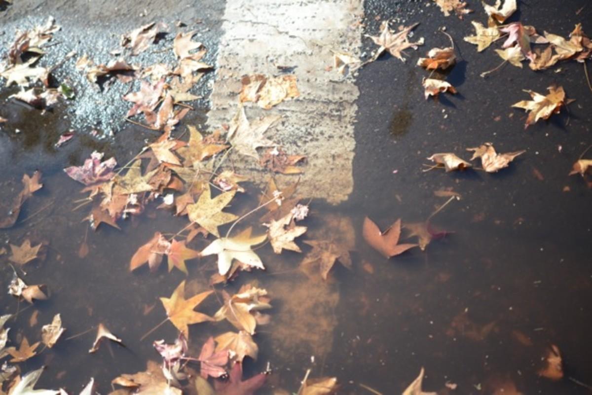 {Wet weather remnants}