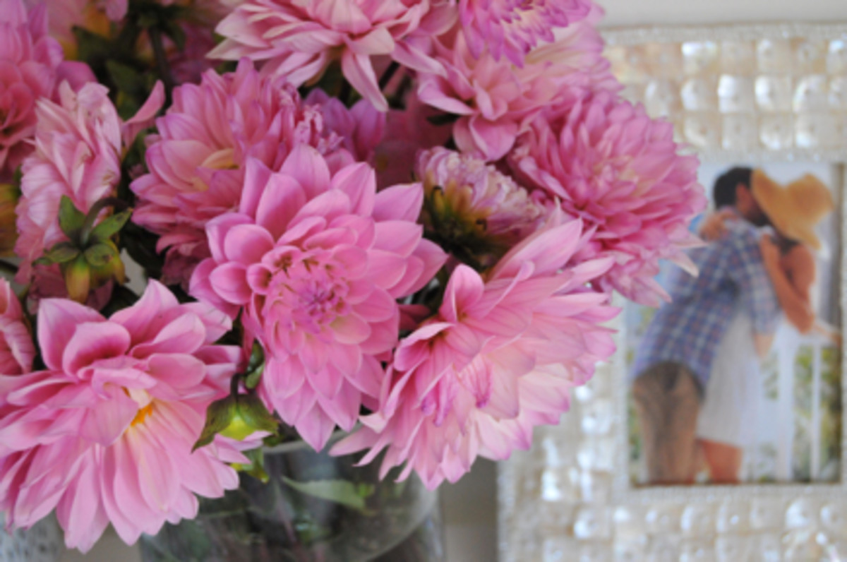 {I treat myself to bright flowers and keep plenty of pictures nearby}