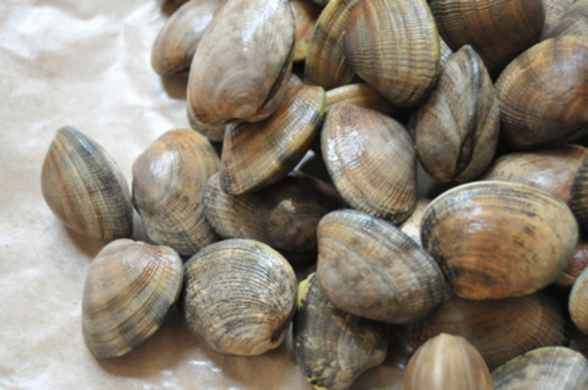 clam1