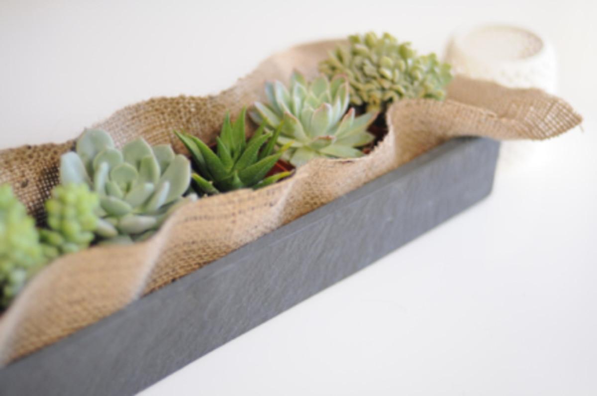 cactus6