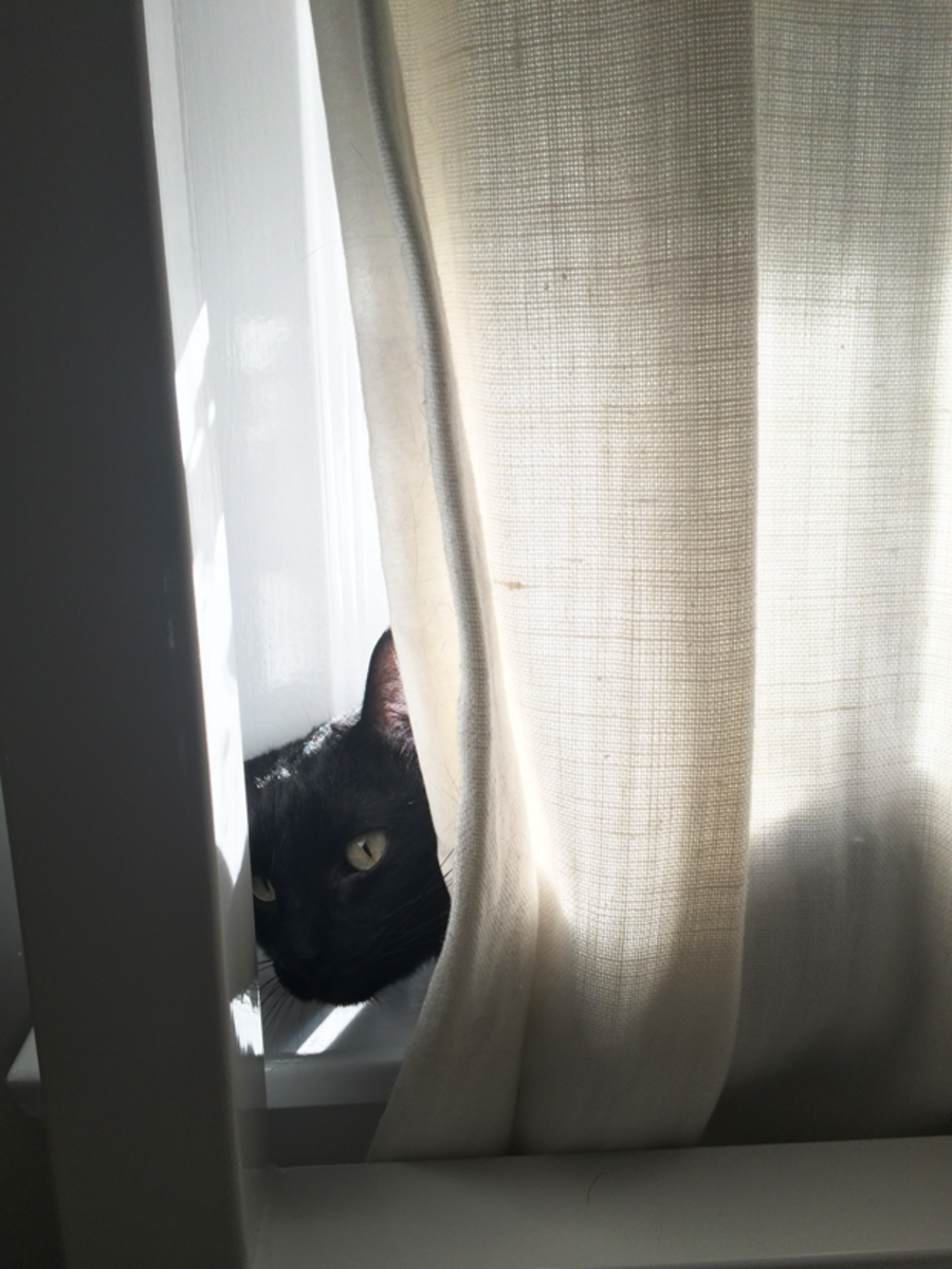 {Luna's new favorite spot in the window}