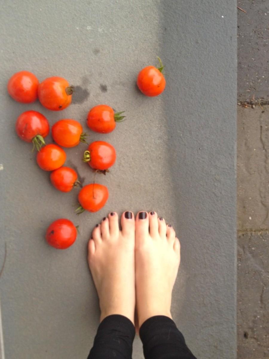 barefoot-tomato-picking