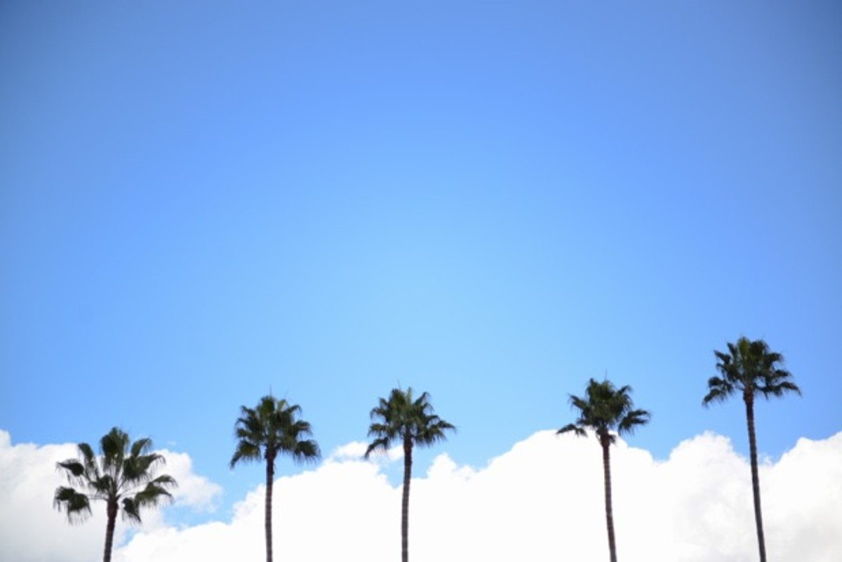 palm-trees-%2B-windy