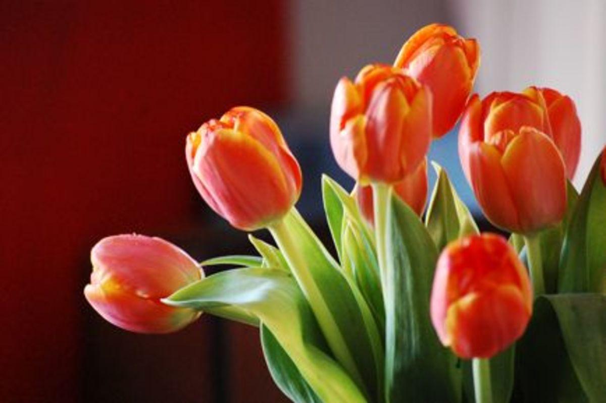 springcolor2