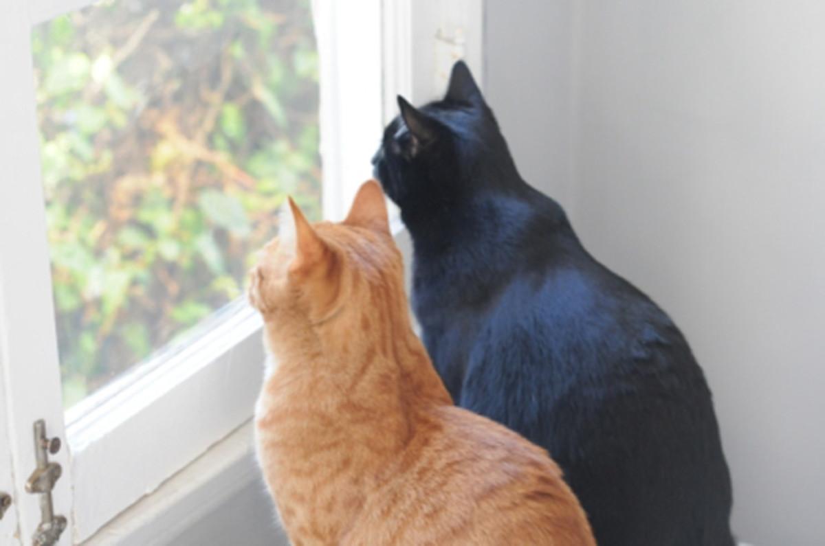 bird-watching_0