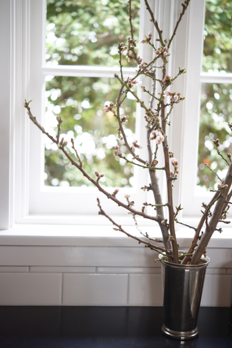 {Cherry blossom branches for the kitchen}