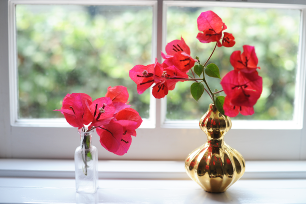 {Bougainvillea in lieu of a bouquet flowers}