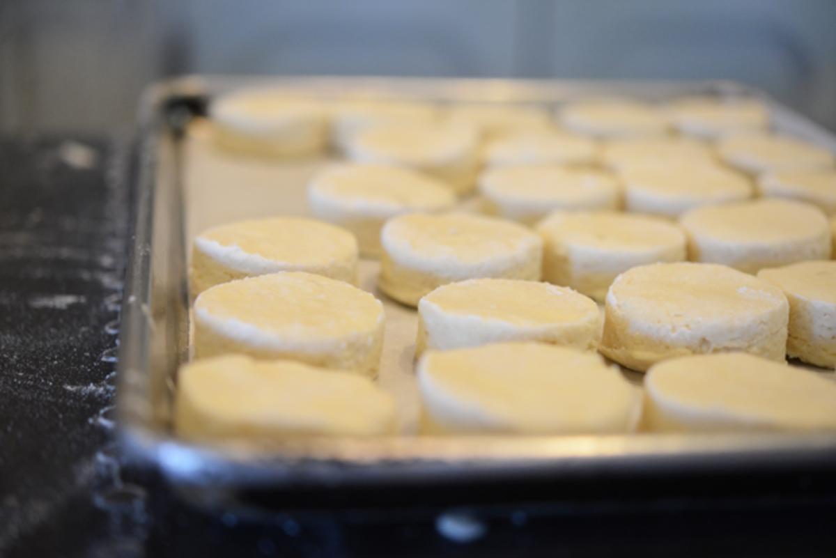 biscuit14