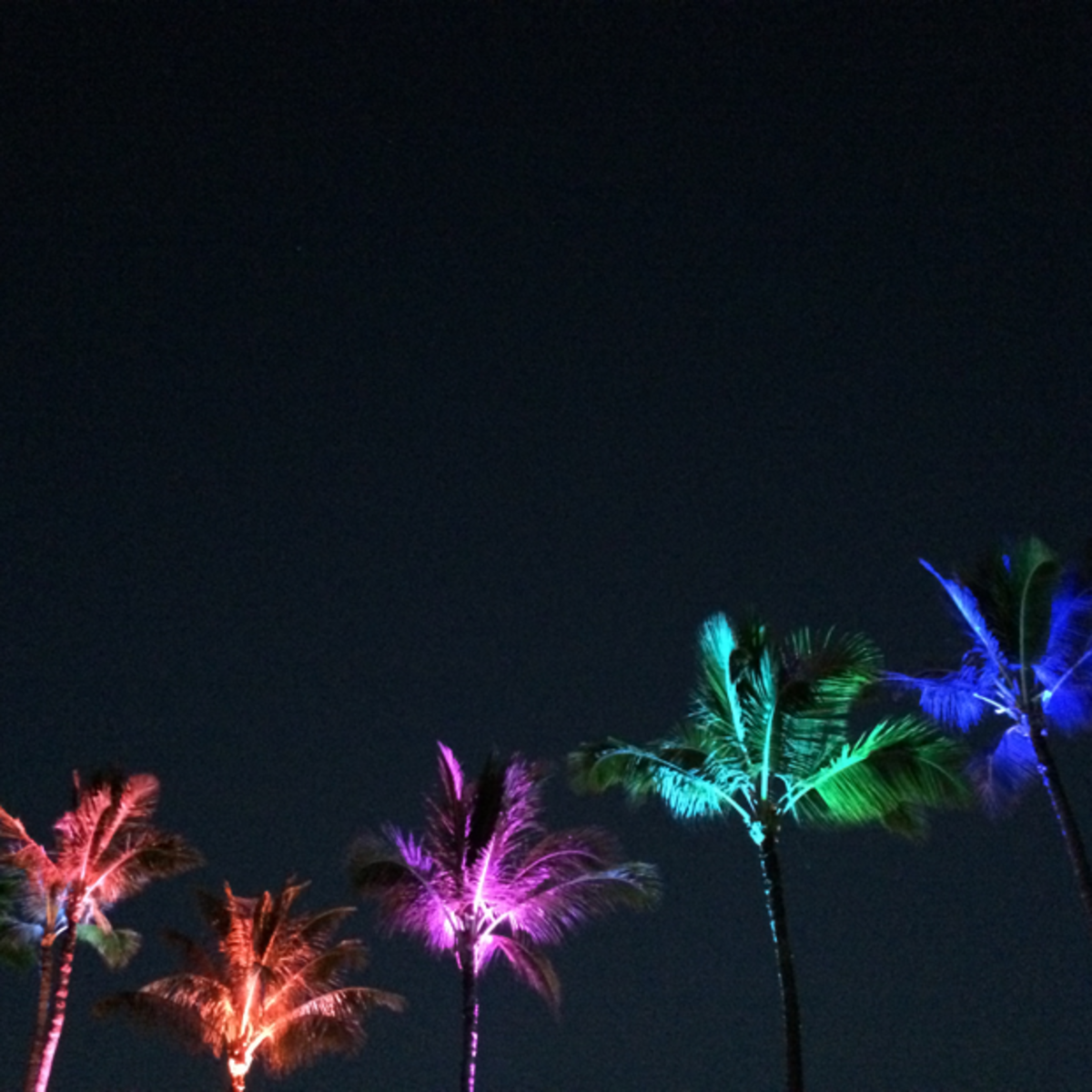 {Palms at night}