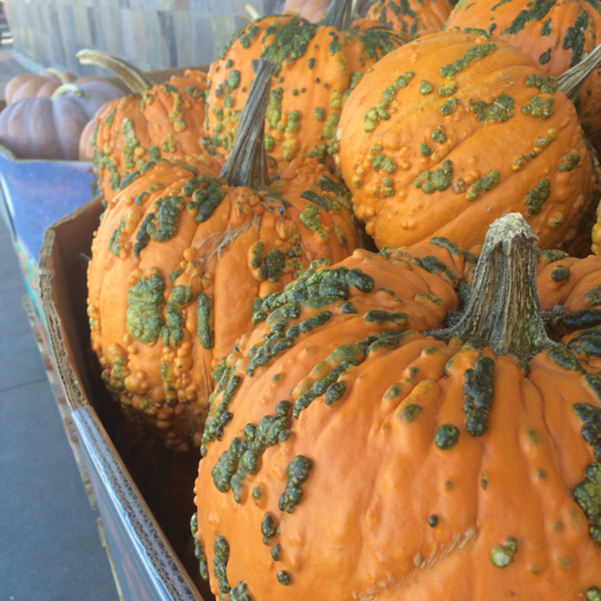 {Crazy-looking pumpkins}