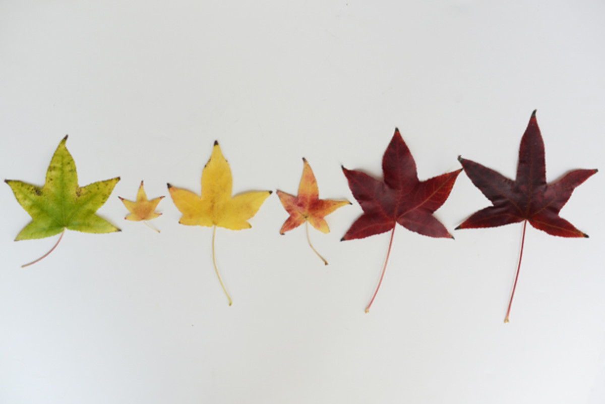 {Leaves from a morning walk}
