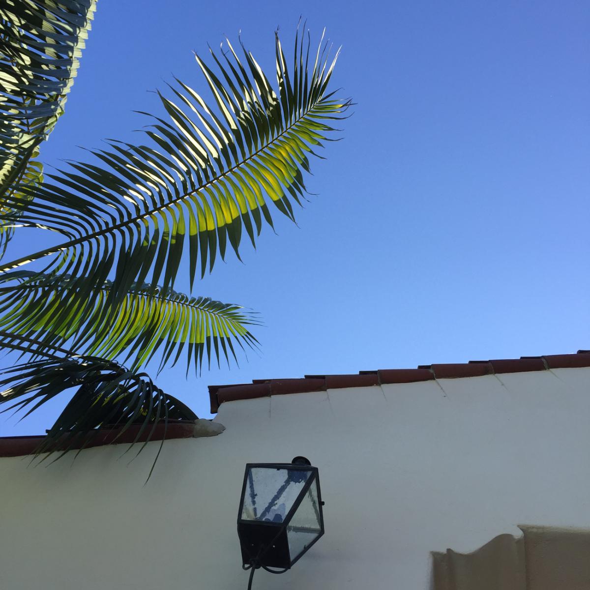 {Palms + crystal blue sky}