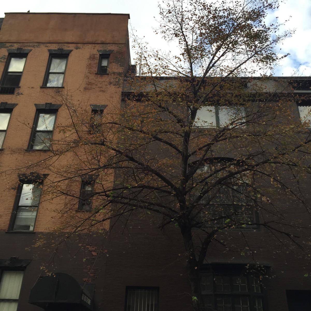 {The changing of seasons, in New York last week}