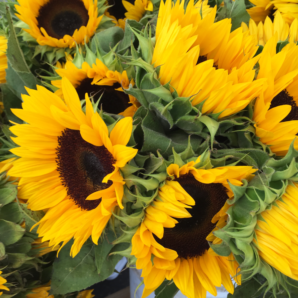 {Sunny fall blooms}