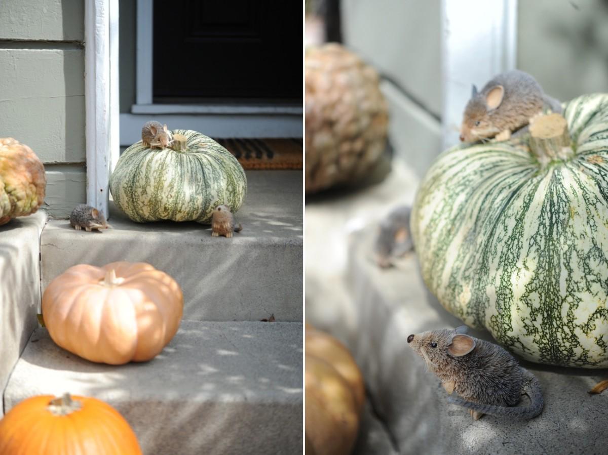 {Mice + pumpkins}