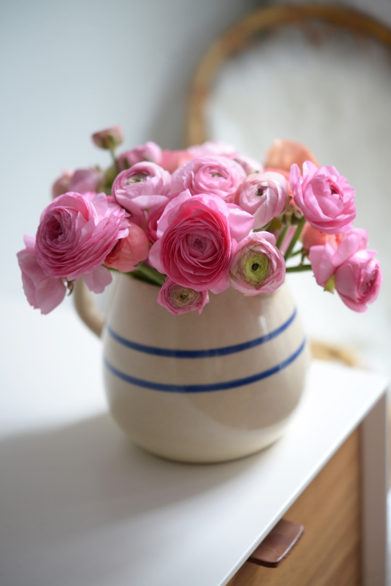 {Ranunculus always mean Spring is well underway}